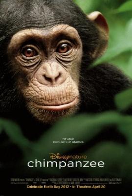 Šimpanz - Chimpanzee